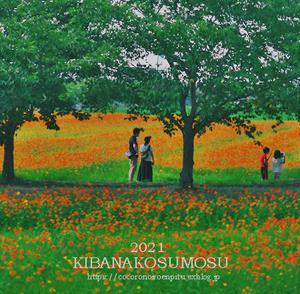 キバナコスモスの咲く頃:橿原市