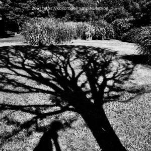 猛暑日:奈良県馬見丘陵公園