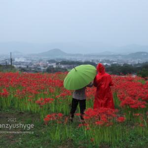 秋雨を楽しむ:御所市「九品寺」