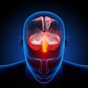 脳科学から考える英語学習方法