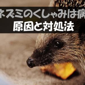 ハリネズミがくしゃみをする原因と対処法【病気の可能性は?】