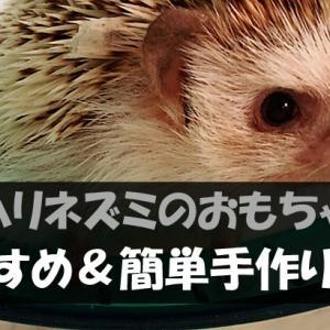ハリネズミが喜ぶおすすめおもちゃ【手作りも可能!】