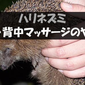 ハリネズミのお腹・背中マッサージのやり方【3つの効果あり!】