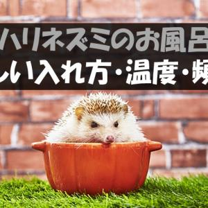【ハリネズミのお風呂】正しい入れ方・温度や頻度など