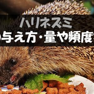 【ハリネズミの餌の与え方】量や頻度・食べない時の対処法など