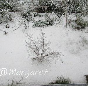雪が降り積もっています~