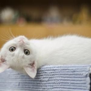 岐阜県でおすすめの猫カフェ10選、猫に会えるカフェ1選