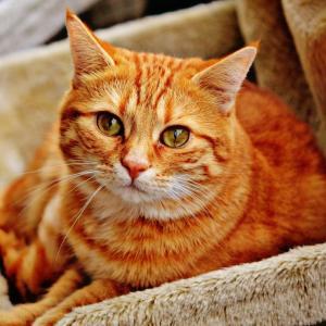 静岡県でおすすめの猫カフェ13選