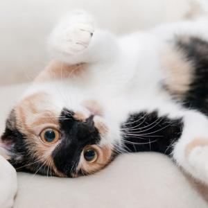千葉県でおすすめの猫カフェ5選