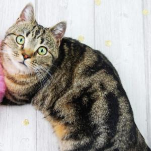 群馬県でおすすめの猫カフェ4選