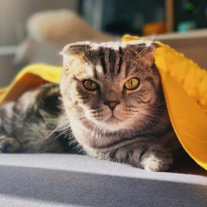 茨城県でおすすめの猫カフェ6選