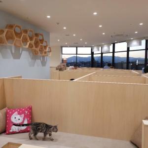 Moff animal cafeグランベリーパーク店の最新体験レポート!