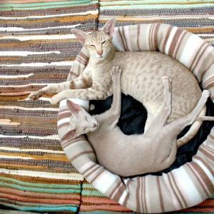 鳥取県でおすすめの猫カフェ2選