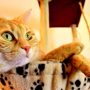【2020年版】大宮でおすすめの猫カフェ3選【猫画像多め】
