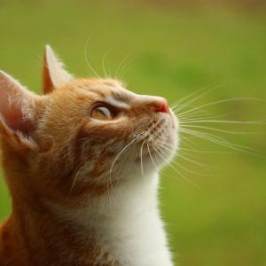 大分県でおすすめの猫カフェ6選