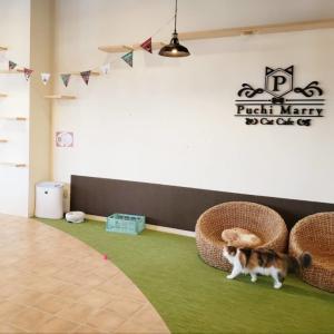 【2020年版】猫カフェぷちまりー沖縄北谷店 体験レポート!