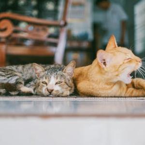 高円寺でおすすめの猫カフェ2選