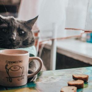 葛西でおすすめの猫カフェ「NECOT COFFEE HOUSE」をご紹介!