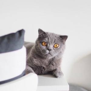 溝の口でおすすめの猫カフェ「猫式」をご紹介!