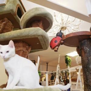 【2020年版】猫カフェねこのす千葉東金店体験レポート!【動物カフェ】