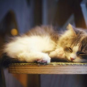 鹿児島県でおすすめの猫カフェ3選