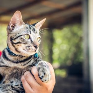 【2020年版】京都でおすすめの猫カフェ13選+看板猫に会えるカフェ2選
