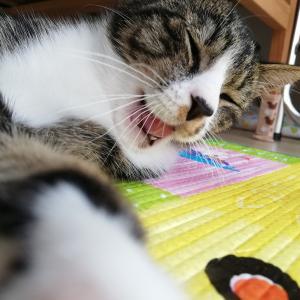【猫と暮らしているんです】猫と暮らす前にしておきたい準備