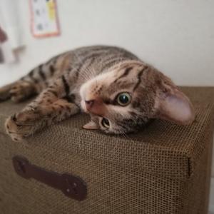 【動画概要】出勤前の貴重な猫タイム【猫と暮らしているんです】
