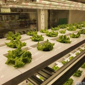 都心の地下の野菜工場!・・・METRO Farm@ソウル・鍾路3街