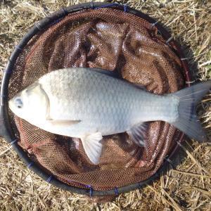初釣り 網道下池