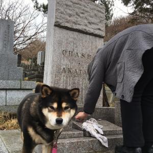 立ち待岬の墓地は最高なんだぜ〜