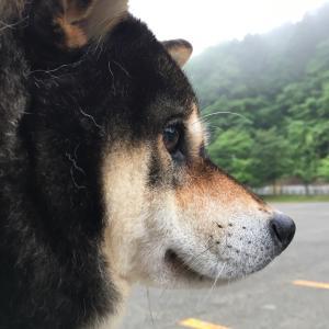 円山公園付近は霧につつまれ