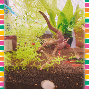 ひきこもりフネアマ貝