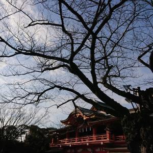 今年初めて千葉神社へ