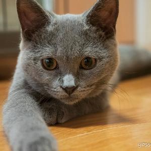 猫のいる生活はじまりました!