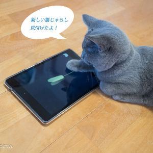 猫のいる生活(2週目)