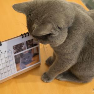 愛猫カレンダーを作ってみた