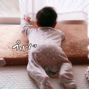 【育児vlog】身の回りのものへの興味がすごい!生後7ヶ月赤ちゃんの様子