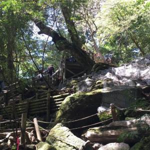2015GW明け 屋久島の旅7 縄文杉