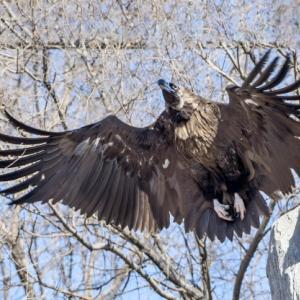 飛んだり獲ったり・鷹も学ぶ「鷹乃学習」