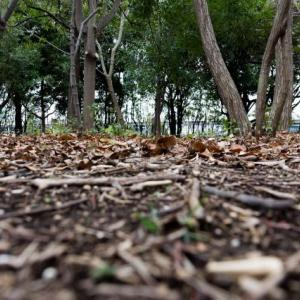 蟄虫坏戸 | むしかくれてとをふさぐ | 沖縄 | トーカチ | 米寿 | 風習
