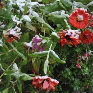 本格的な冬への入り口、小雪(しょうせつ)・虹蔵不見(にじかくれてみえず)