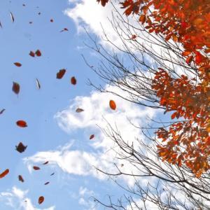 木枯らしが木の葉を散らす「朔風払葉 (きたかぜこのはをはらう)」