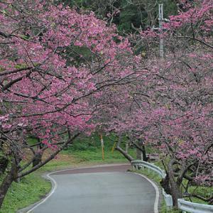 大寒   長崎ランタンフェスティバル   もとぶ八重岳桜まつり   風物詩