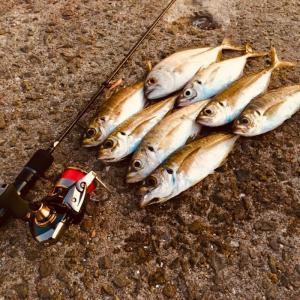 大阪湾 冬シーズンのアジングを総括