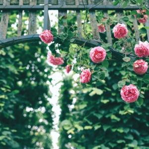つるバラを植えるまで