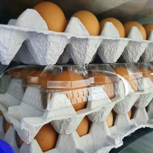 韓国スーパー会計後に渡された「まさかの品」!冷蔵庫開ける度に笑える!