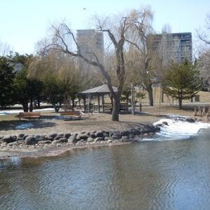 中島公園:雪は解けたが・・・・・・。