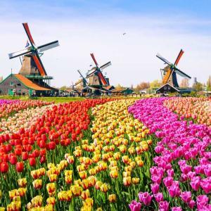 オランダ/アムステルダム🇳🇱_海外旅行12