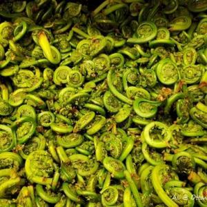 旬の山菜「Fiddlehead」で和風パスタ